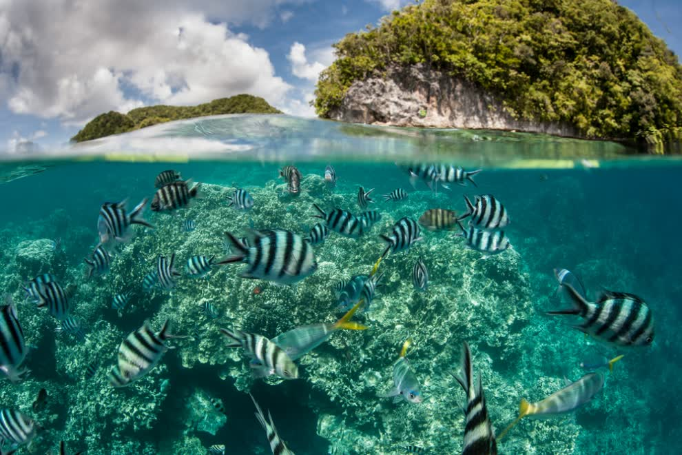 damselfish-sea-coral